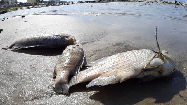 Giấc mơ thấy cá chết là điềm báo gì, lành hay dữ?