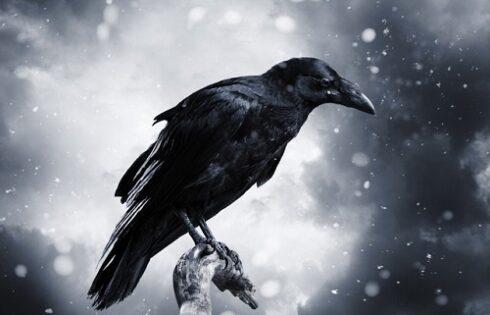 Nằm mơ thấy quạ đen có điềm gì, đánh số mấy?