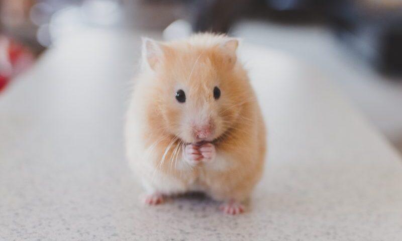 Nằm Mơ Thấy Chuột Đánh Con Gì? – Ý Nghĩa Giấc Mơ Thấy Chuột